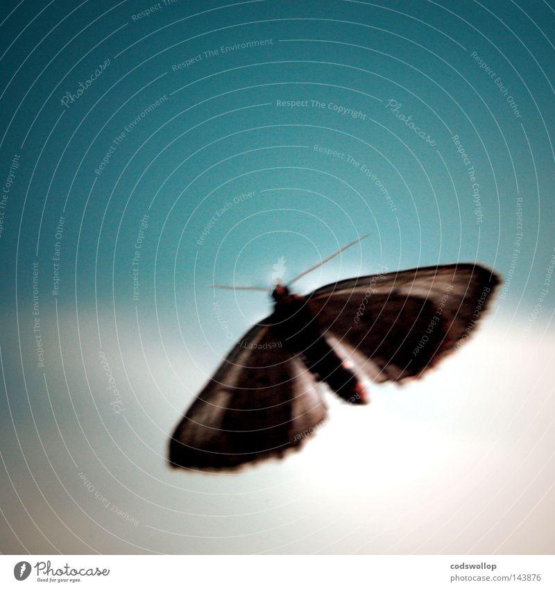 high on liquid skin Licht Himmel Motte Frieden light moth blue sunlight sky flying blau clouds fliegen Momentaufnahme