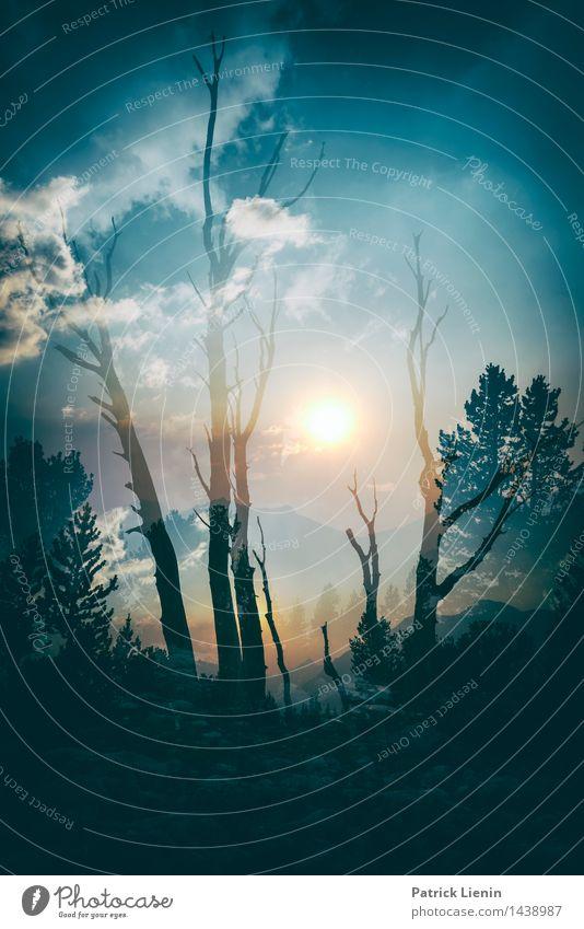 Dreamscape Himmel Natur Ferien & Urlaub & Reisen Pflanze Sommer Baum Erholung Landschaft Wolken Ferne Wald Berge u. Gebirge Umwelt Freiheit träumen
