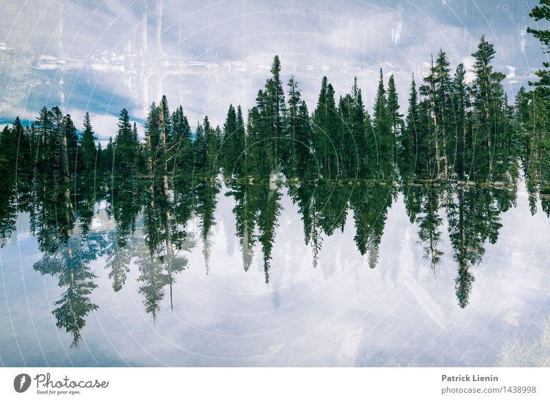 Delusion Himmel Natur Ferien & Urlaub & Reisen Pflanze Sommer Baum Erholung Landschaft Wolken ruhig Ferne Wald Umwelt Leben Freiheit See