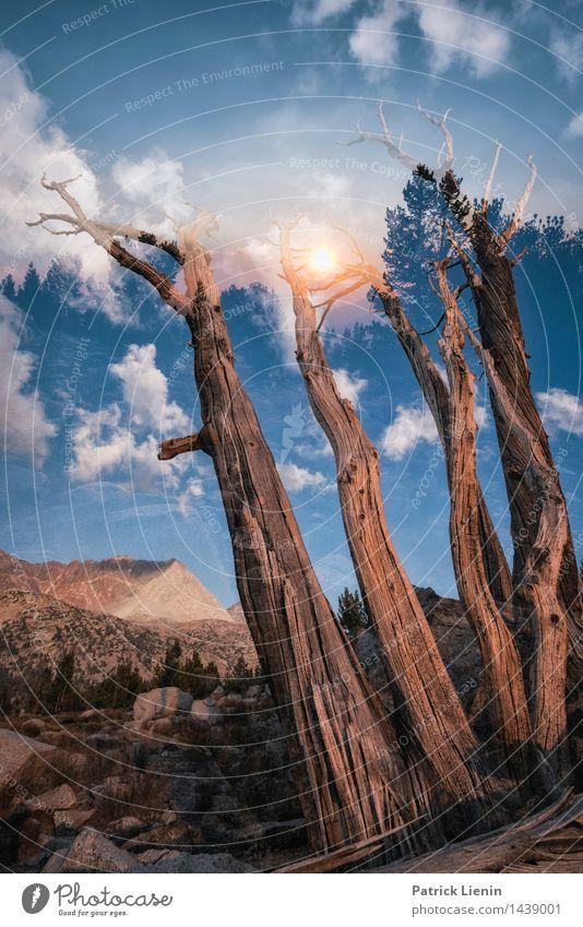 Other Side harmonisch Zufriedenheit Sinnesorgane Erholung ruhig Ferien & Urlaub & Reisen Abenteuer Ferne Umwelt Natur Landschaft Pflanze Urelemente Erde Himmel