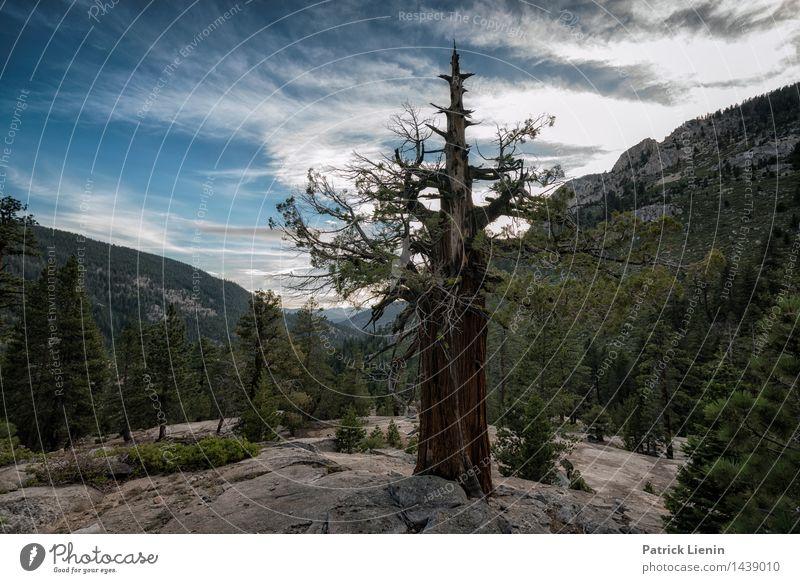 Gut verwurzelt Ferien & Urlaub & Reisen Umwelt Natur Landschaft Pflanze Urelemente Erde Himmel Wolken Sommer Klima Klimawandel Wetter Schönes Wetter Baum Felsen