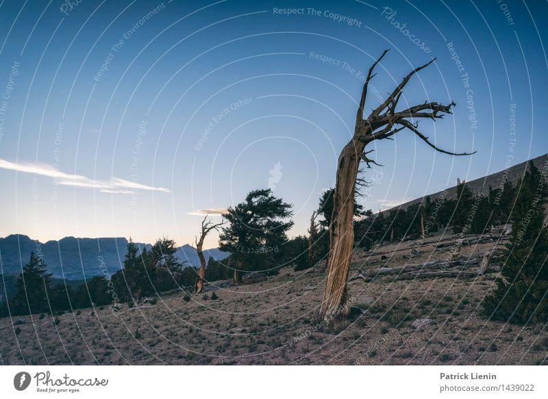 Windschief Natur Ferien & Urlaub & Reisen Pflanze Baum Erholung Landschaft ruhig Ferne Winter Berge u. Gebirge Umwelt Leben Freiheit Zufriedenheit Wetter
