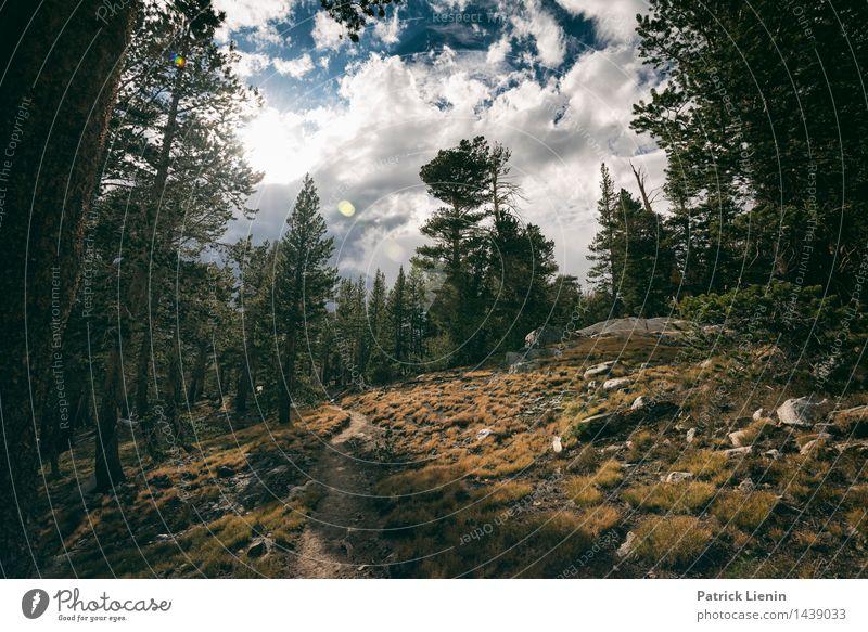 Weg nach oben Natur Ferien & Urlaub & Reisen Pflanze Sommer Baum Sonne Landschaft Ferne Wald Berge u. Gebirge Umwelt Wege & Pfade Freiheit Felsen Tourismus