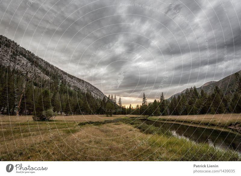Lyell Canyon harmonisch Wohlgefühl Zufriedenheit Sinnesorgane Erholung Ferien & Urlaub & Reisen Umwelt Natur Urelemente Erde Himmel nur Himmel
