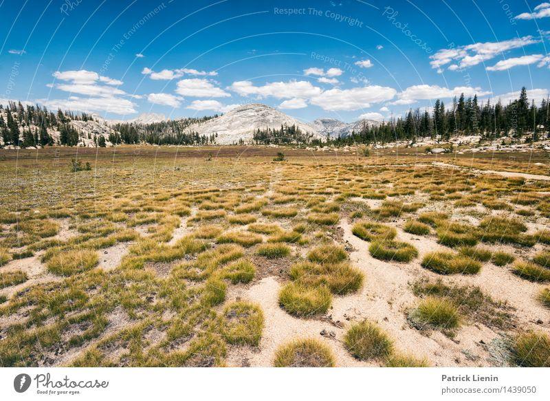 High Sierra Himmel Natur Ferien & Urlaub & Reisen Pflanze Sommer Erholung Landschaft Wolken ruhig Ferne Berge u. Gebirge Umwelt Wiese Lifestyle Freiheit