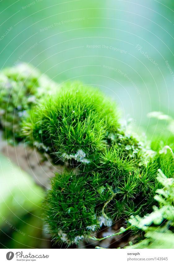 Mikrokosmos Natur grün Pflanze Blatt Umwelt dunkel klein Lampe Beleuchtung Hintergrundbild Erde Wachstum Bodenbelag weich Weltall zart