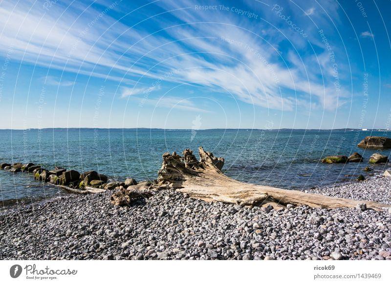 Ostseeküste auf der Insel Rügen Natur Ferien & Urlaub & Reisen blau Baum Erholung Meer Landschaft Wolken Küste Stein Tourismus Idylle Romantik Baumstamm