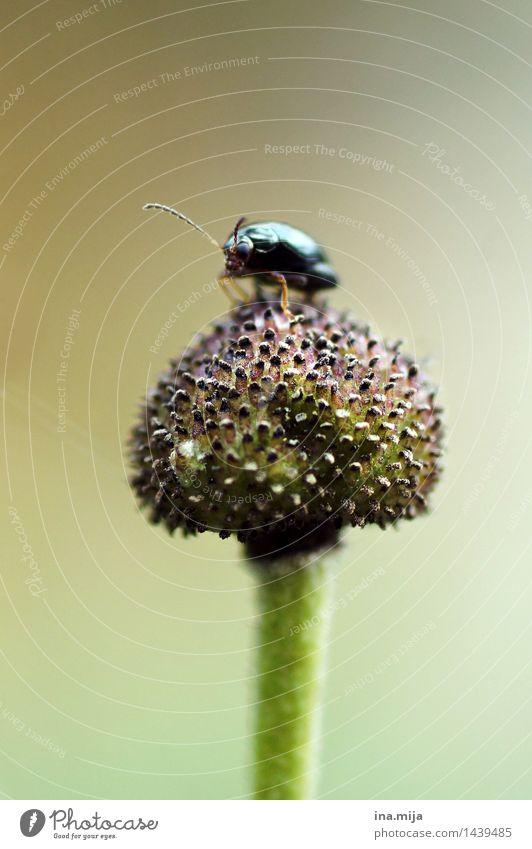 Käferchen Natur grün Tier schwarz Umwelt Leben klein Erde frei Wildtier warten rund Lebewesen entdecken Insekt krabbeln