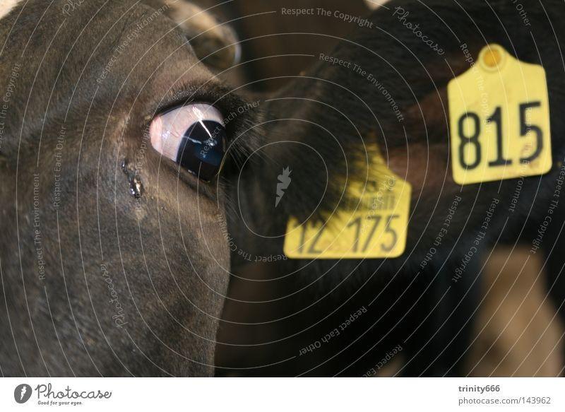 nur eine nummer Kuh Ziffern & Zahlen Auge Ohr Trauer Blick bewegungslos dunkel Säugetier