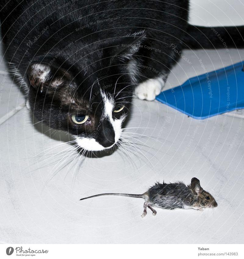 Tom & Jerry Tom Tom Katze Maus Jagd Beute Fressen Tod Sensenmann Totschlag Schicksal Ernährung Lebensmittel Nahrungssuche Ende Angst Panik Vergänglichkeit