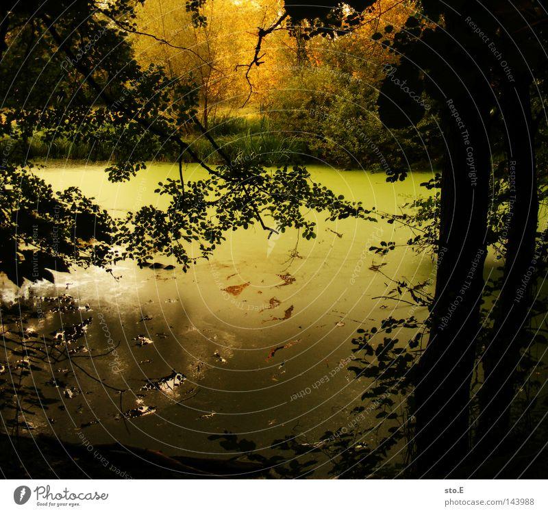weder teich noch pfütze Gewässer Teich Bach See Herbst Sommer Baum Pflanze Blatt Geäst Reflexion & Spiegelung Schatten verdunkeln grün braun gelb rot parallel
