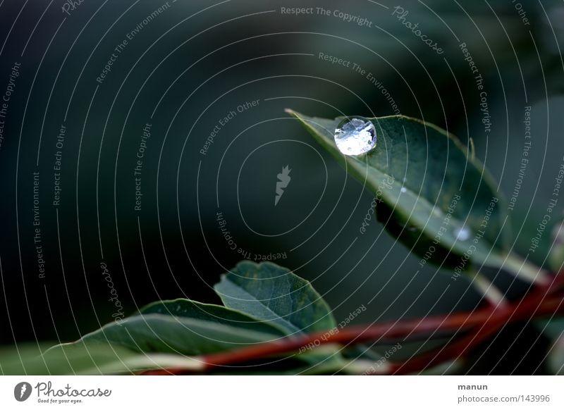 Raindrop elegant harmonisch Wohlgefühl Sommer Natur Pflanze Wasser Wassertropfen Frühling Herbst Sträucher Blatt glänzend nass grün ästhetisch rein Umweltschutz