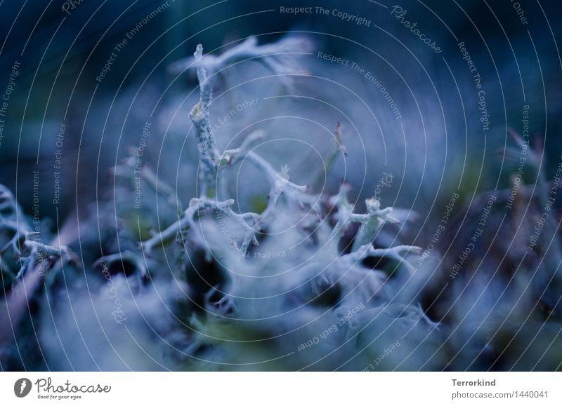 you.caused.this. Natur Pflanze blau schön grün weiß Blatt Wald schwarz Herbst Frühling Wiese Garten Park ästhetisch nah