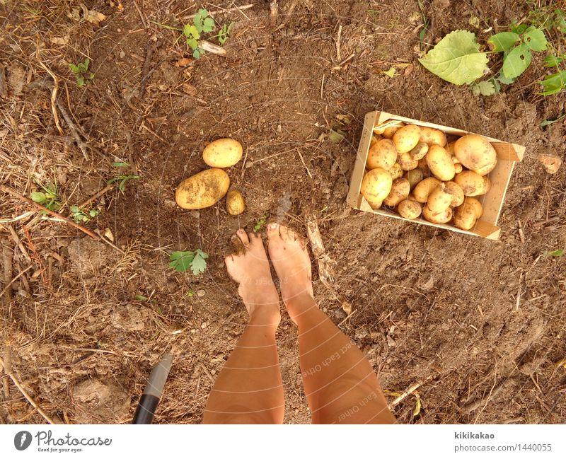 Find the Kartoffel Baby! Lebensmittel Gemüse Ernährung Bioprodukte Freizeit & Hobby Garten Gartenarbeit Landwirtschaft Forstwirtschaft Mensch Beine Fuß 1