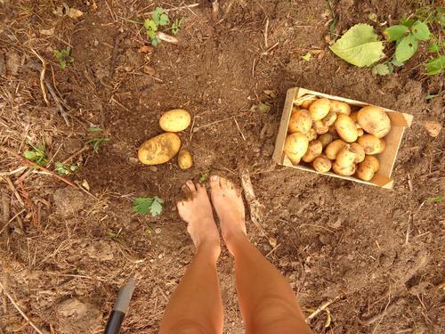 Find the Kartoffel Baby! Mensch Jugendliche Pflanze Sommer 18-30 Jahre Erwachsene Gesundheit Glück Beine Garten Lebensmittel Fuß Freizeit & Hobby Ernährung