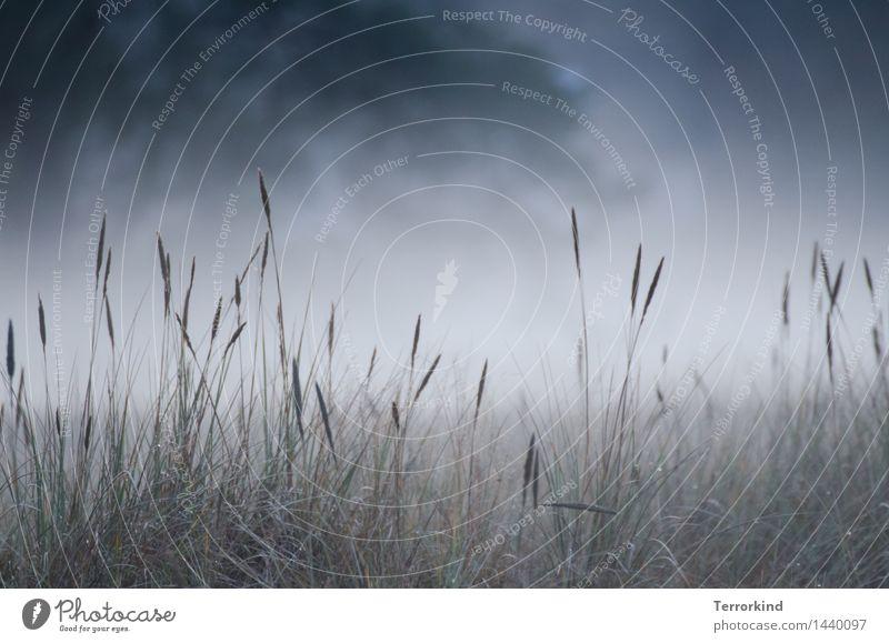 and.feeling.fine. Natur Landschaft Pflanze Herbst Wetter Schönes Wetter Nebel Gras Sträucher Blatt Grünpflanze Wildpflanze Garten Wiese Feld Wald Küste Nordsee