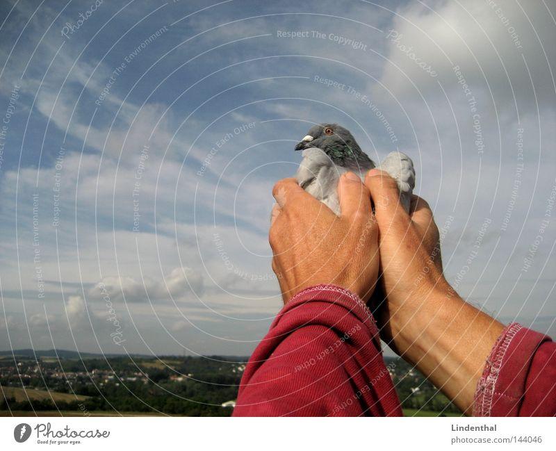 SET HER FREE II Taube Hand gefangen freilassen Finger festhalten Streicheln Horizont Brieftaube Vogel fliegen Freiheit Himmel Luftverkehr