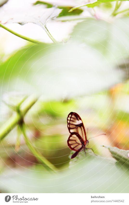 schmetterrekord...150:) Natur Pflanze schön Baum Erholung Blatt Tier Wiese klein außergewöhnlich Garten fliegen Park elegant Wildtier Glas