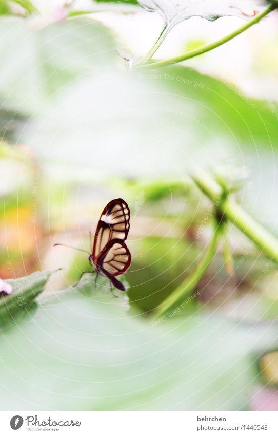klein, aber fein Natur Pflanze grün schön Sommer Baum Erholung Blatt Tier Frühling Wiese Garten außergewöhnlich fliegen Park