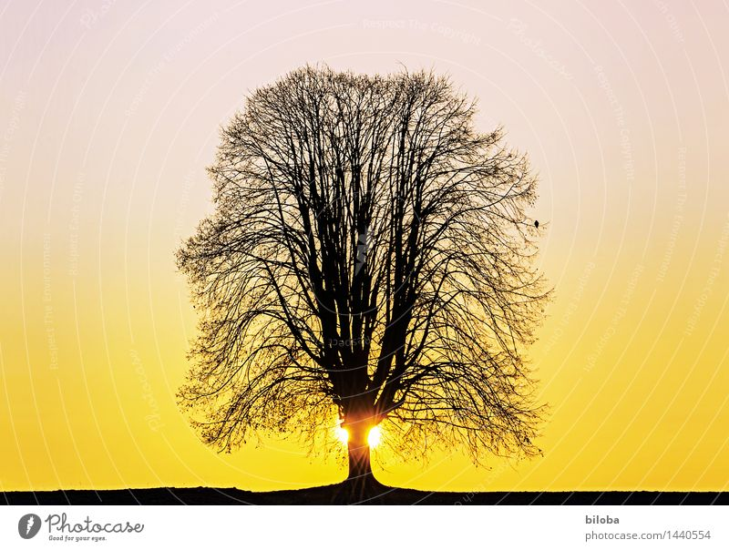 Der Baum Himmel Winter schwarz gelb Herbst Horizont orange Hoffnung violett Wolkenloser Himmel Linde