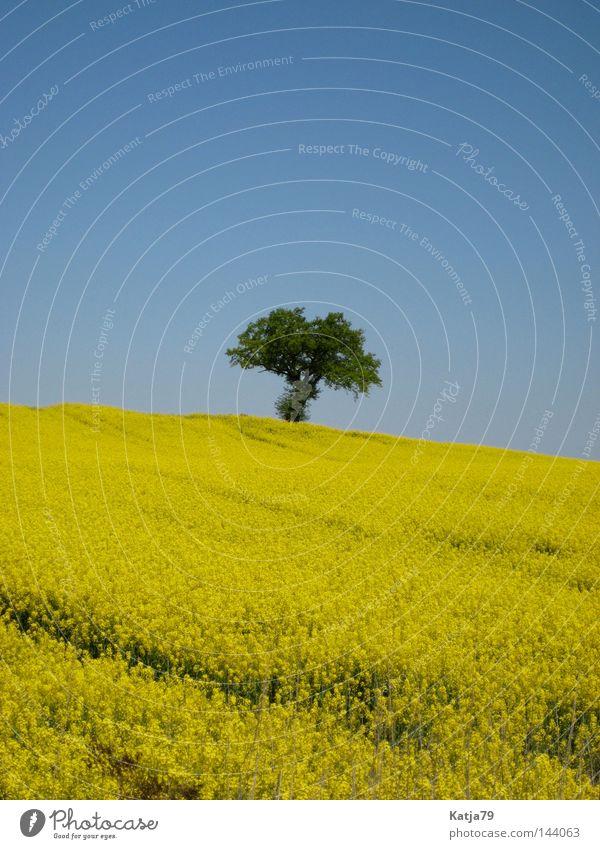 Das schöne Mecklenburg! Natur Baum Einsamkeit gelb Frühling Feld Raps Mecklenburg-Vorpommern