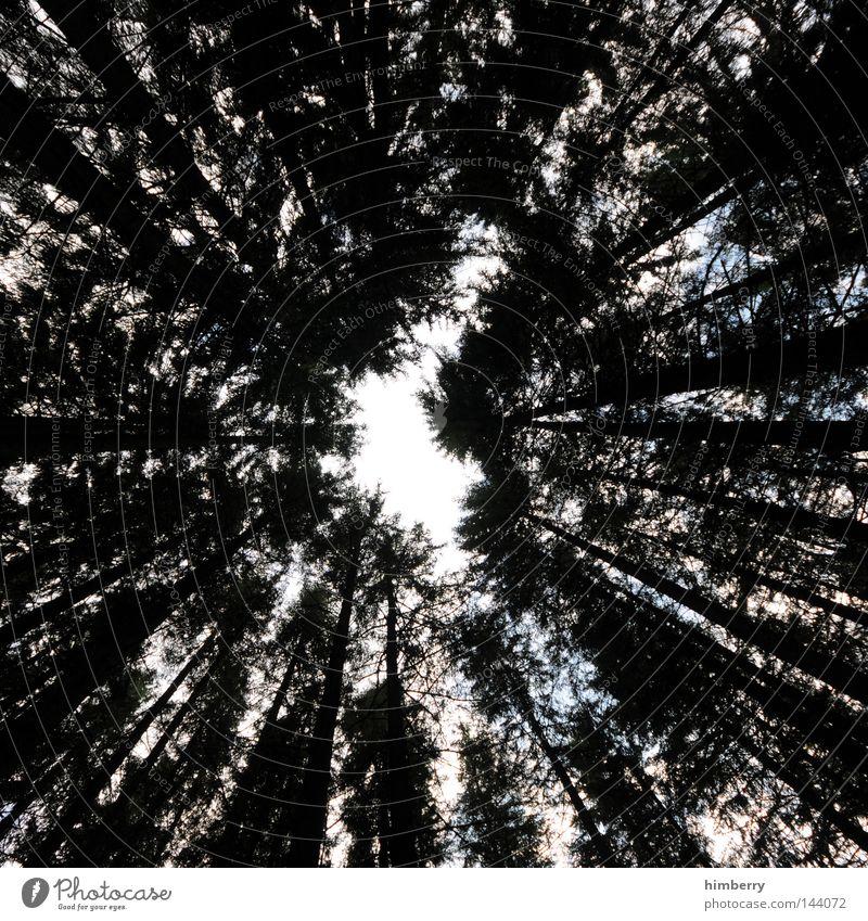 gipfeltreffen Himmel Natur grün Baum Erholung Blatt ruhig Wald Umwelt Deutschland Park Luft Wachstum Wildtier Niveau Frieden