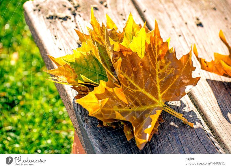 herbstlich verfärbte Blätter Natur Pflanze Herbst Blatt glänzend hell trocken gelb rosa rot farbig prächtig Bank Holzbank Parkbank Brett Jahreszeiten Farbe