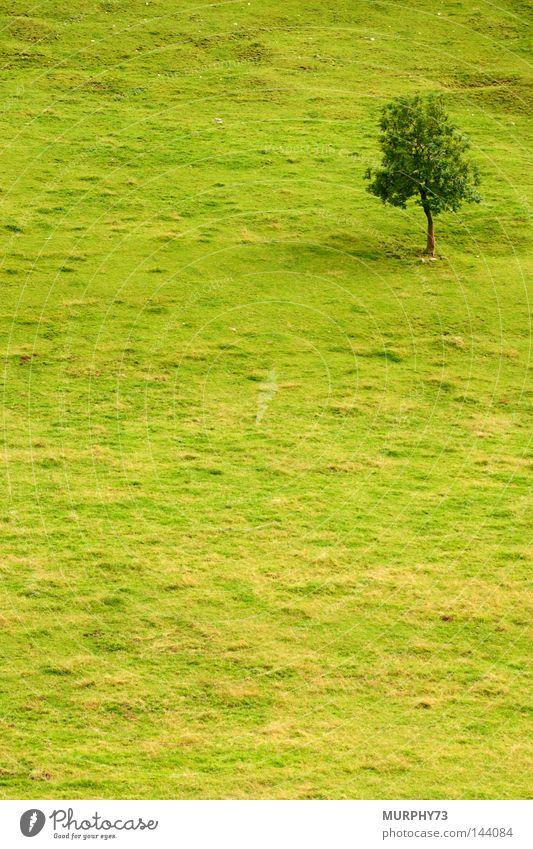 Baum in Grün Baum grün Sommer Einsamkeit Wiese Weide Berghang