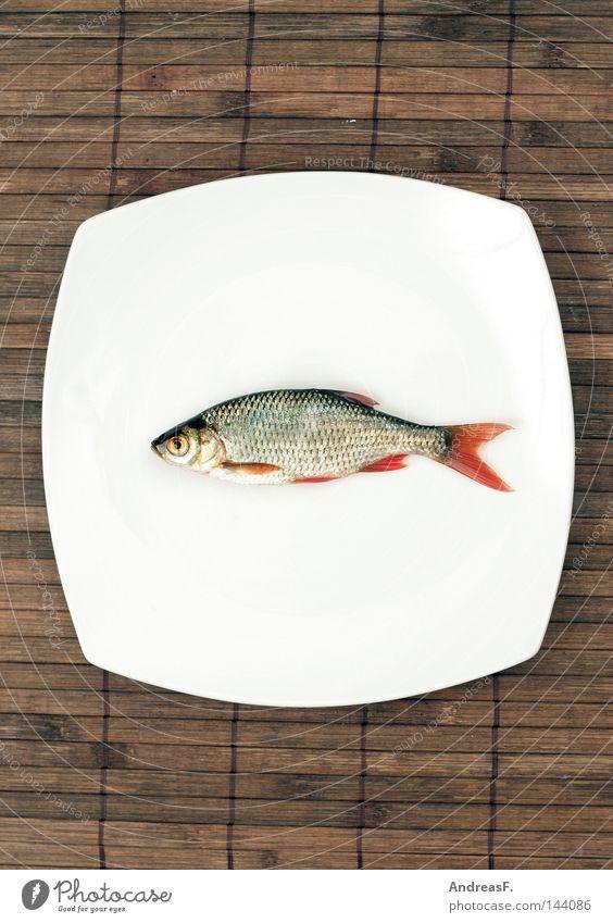 Sushi Fisch Japan Japanisch Teller Ernährung Mahlzeit fischig Fischgericht Restaurant Ekel Rotauge Angeln Fischereiwirtschaft Flosse Tod lecker Abendessen
