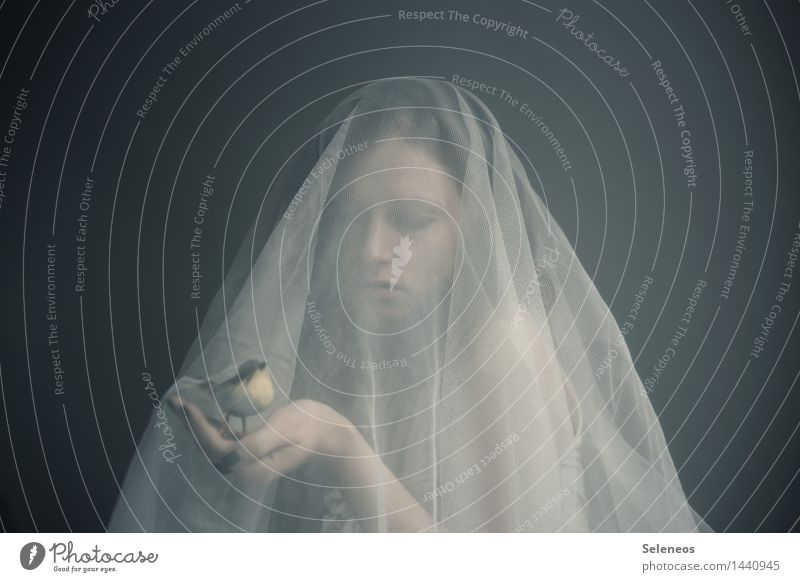 . Mensch feminin Frau Erwachsene Körper Haut Kopf Gesicht Arme Hand 1 Tier Vogel beobachten berühren Vertrauen Sicherheit Schutz Geborgenheit Tierliebe Farbfoto
