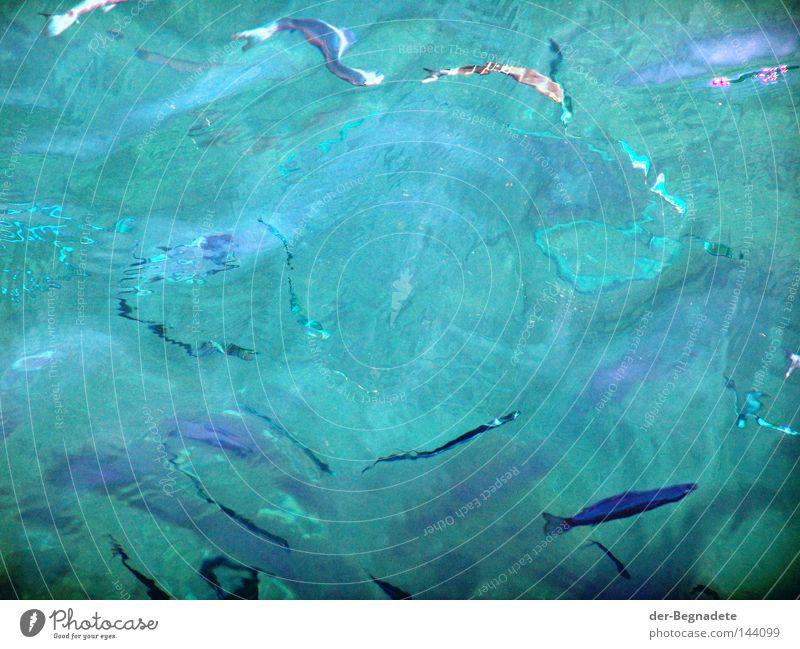 frische Fische Wasser Meer Wellen Rätsel unklar Schwarm Verzerrung diffus Tier Wasseroberfläche blau-grün Fischschwarm