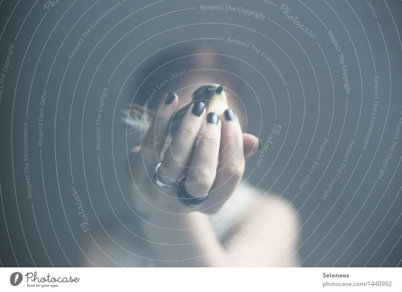 Piep Nagellack harmonisch Wohlgefühl Zufriedenheit Sinnesorgane ruhig Mensch Arme Hand Finger Vogel Vertrauen Sicherheit Schutz Geborgenheit Tierliebe Farbfoto