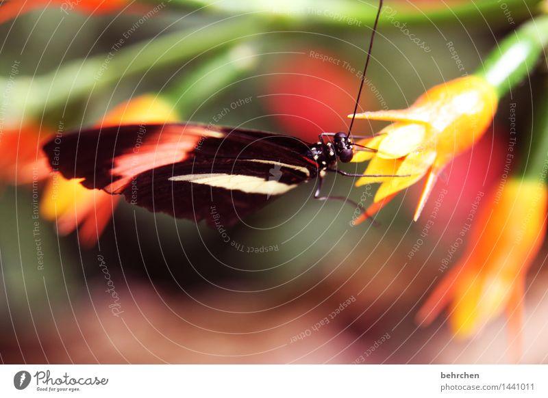 gut getarnt Natur Pflanze schön Sommer Blume Blatt Tier Blüte Frühling Wiese außergewöhnlich Garten Beine fliegen Park Wildtier