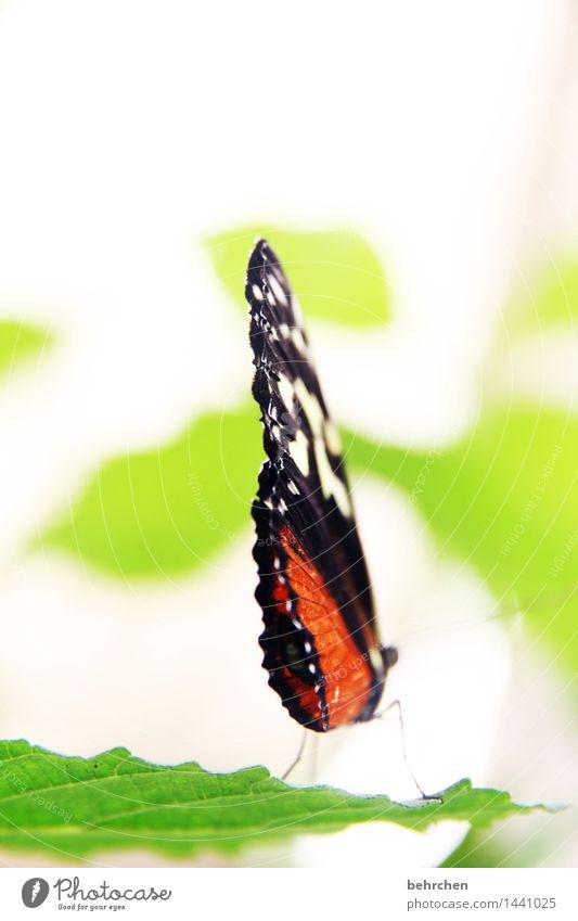 LMAA! Natur Pflanze Tier Frühling Sommer Schönes Wetter Baum Blatt Garten Park Wiese Wildtier Schmetterling Flügel 1 Erholung fliegen sitzen außergewöhnlich