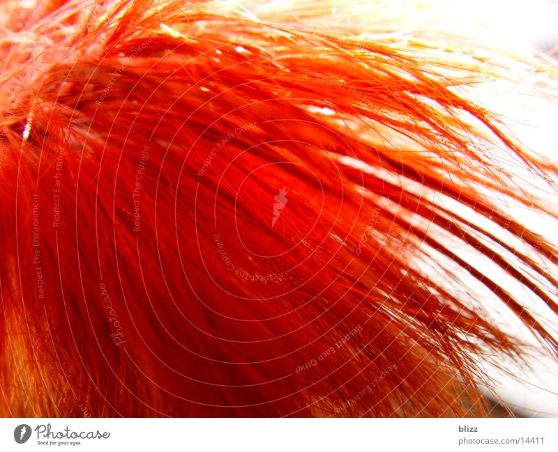 Feuerrote Haare frisch knallig Mensch Haare & Frisuren Kopf Makroaufnahme Dynamik Bewegung hair red head dynamic movement fresh colourful saturation leuchten