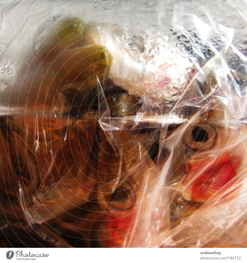 fischtüte Auge Ernährung Lebensmittel frisch Fisch Kunststoff Gastronomie Rauschmittel Fleisch Sardinen