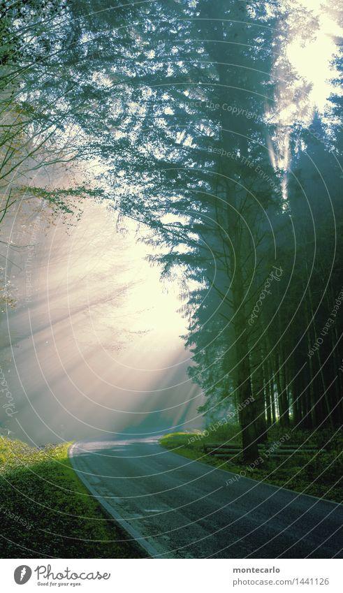 es geht aufwärts Umwelt Natur Landschaft Pflanze Urelemente Erde Luft Herbst Klima Schönes Wetter Nebel Baum Gras Wildpflanze Wald Straße Blick einfach