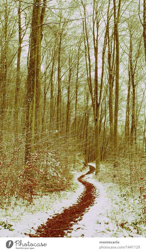 ich geh meinen weg..... Umwelt Natur Landschaft Pflanze Urelemente Erde Winter Wetter Schnee Baum Sträucher Blatt Grünpflanze Wildpflanze Wege & Pfade Fußweg