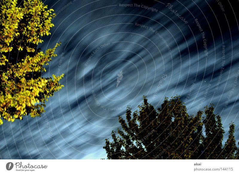 Nightclouds Wolken Nacht Himmel himmelblau Geometrie Laubbaum Perspektive Laubwald Waldwiese Paradies Nadelwald Waldlichtung ruhig grün Pflanze Baum Blatt