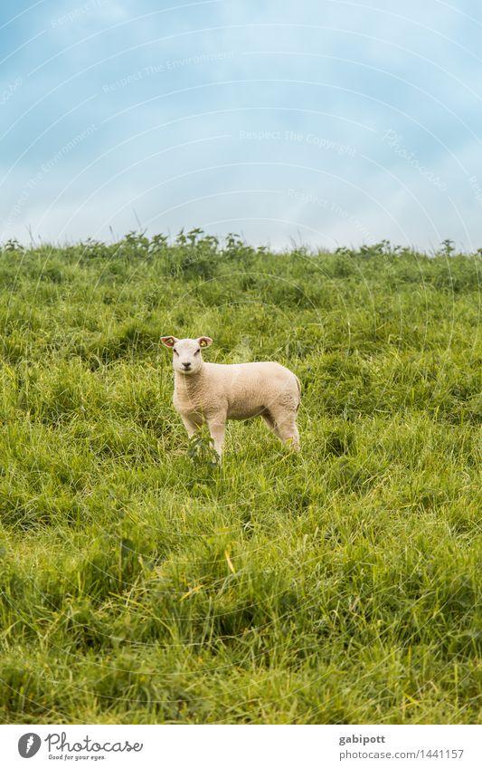 belämmert rumstehen Himmel Natur Pflanze blau grün Sommer weiß Landschaft Tier Umwelt Frühling Wiese Gesundheit Glück wild Feld