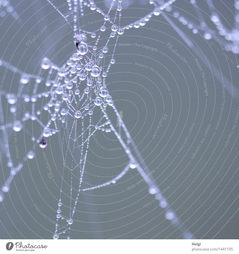 Helgiland II | Perlen... Natur weiß kalt Umwelt Herbst natürlich klein grau außergewöhnlich Nebel Ordnung authentisch ästhetisch Wassertropfen einzigartig