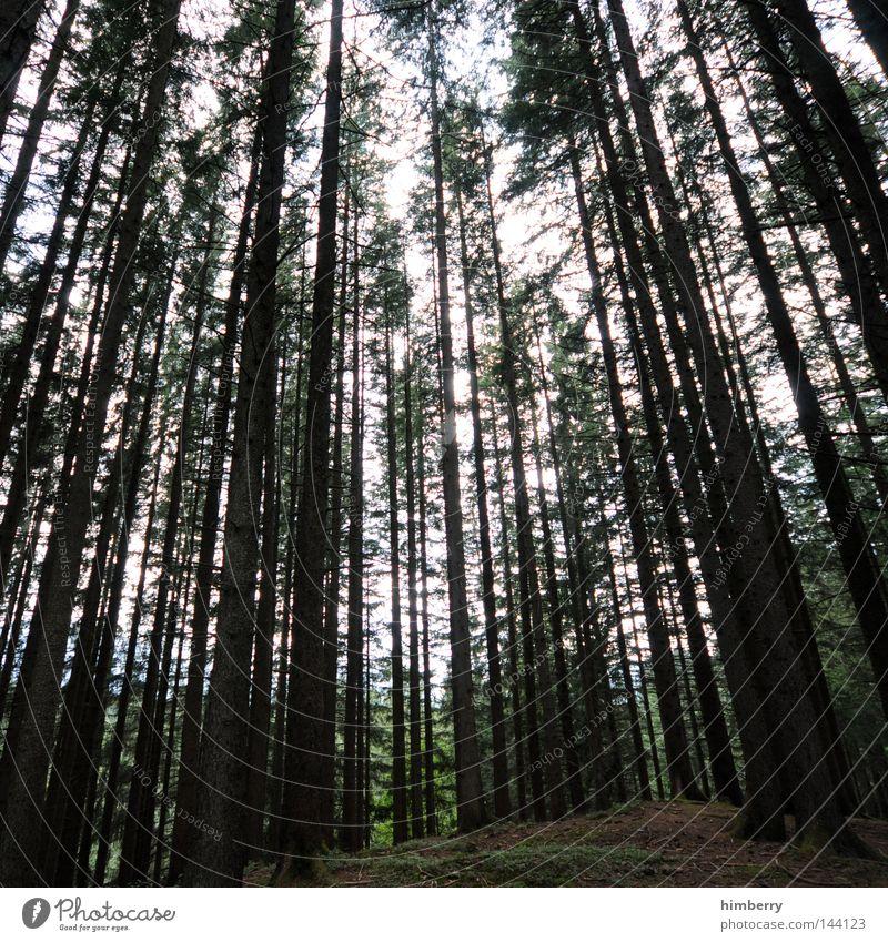 holzwucher Himmel Natur grün Baum Blatt ruhig Wald Erholung Umwelt Herbst Luft Park Wildtier wandern Wachstum Niveau