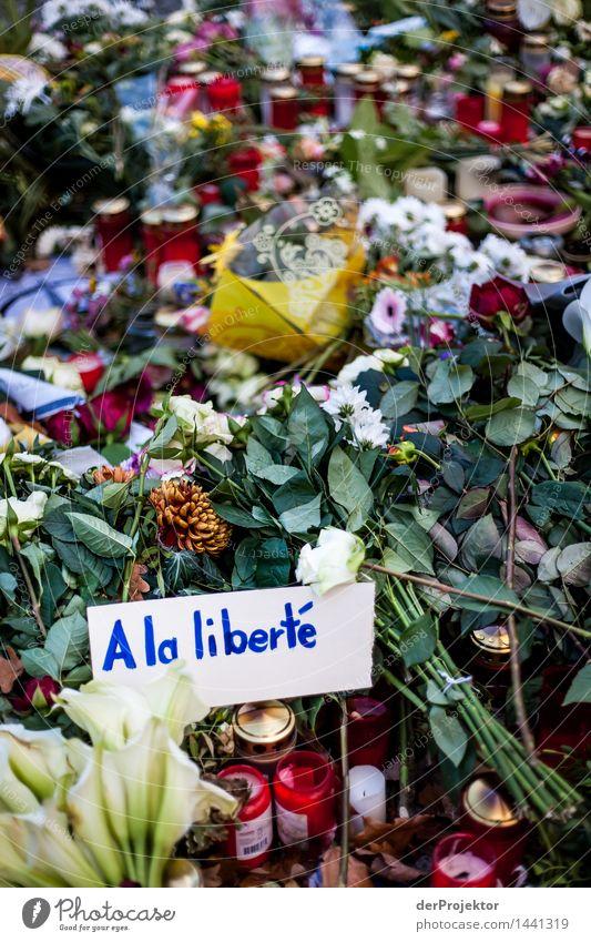 A la liberté Natur Pflanze Landschaft Winter dunkel Umwelt Traurigkeit Blüte Gefühle Tod außergewöhnlich Freiheit Kraft Trauer Sehnsucht Rose