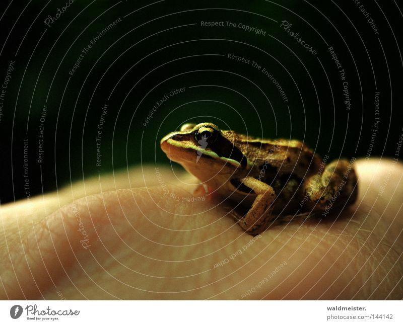 Frosch am Morgen WRN 08 Froschlurche Tier Lurch Amphibie Hand Haut Prinzessin Verhext Froschkönig Umweltschutz Schutz Tierfreund Tierliebe Märchen Unschärfe