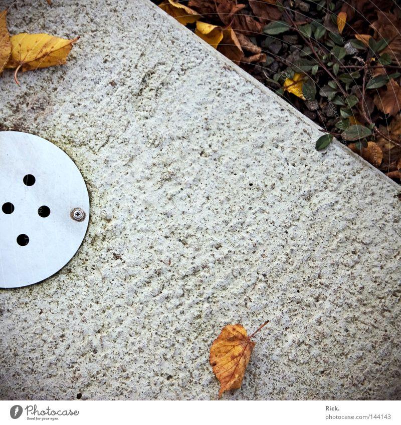 .4-Punkt-Gulli Gully Abwasser Kanalisation Edelstahl Stahl Schraube Beton Herbst Blatt Ecke Pflanze Ranke Vergänglichkeit Wasser Abwasserkanal Metall