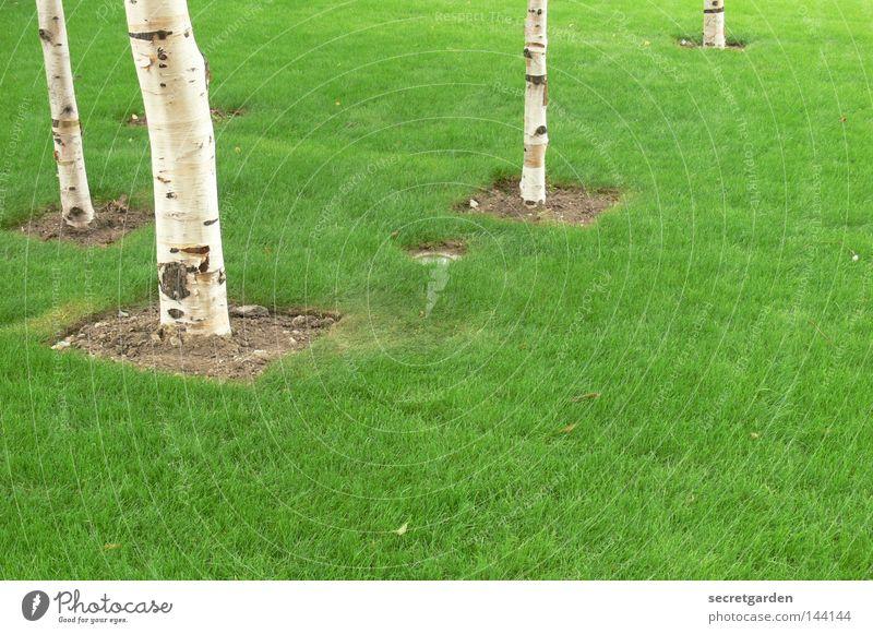 das quadrat im rechteck. Natur weiß Baum grün Sommer Wald Spielen Frühling Garten Haare & Frisuren Park Linie hell Raum modern Ordnung