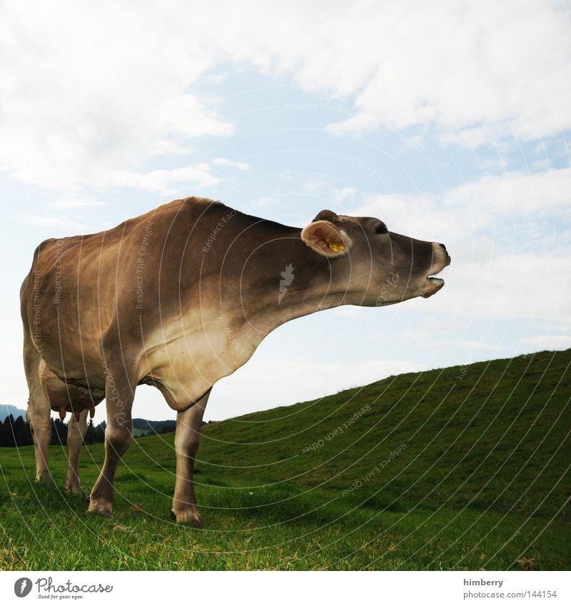milky way Tier Wiese Berge u. Gebirge Beine Deutschland Feld Ohr Fell Hügel Weide Landwirtschaft Kuh Rind Bioprodukte Bayern