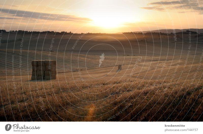 Morgenlicht III Toskana Dämmerung Nebel Dunst Sonnenaufgang Gegenlicht Pflanze Boden Getreide Ähren Halm Weizen Gras Mehl Himmel Ernährung Lebensmittel