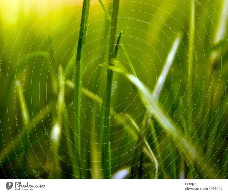 Grasland Natur grün blau Pflanze Wiese Stil Blüte Gras träumen Landschaft Luft Hintergrundbild Wind Umwelt Wachstum Rasen