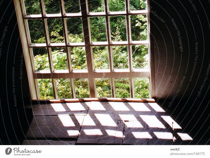 Scheibchenweise Natur alt grün Sommer Landschaft Blatt ruhig Fenster Architektur Religion & Glaube Holz Denken Garten Kirche einfach Vergänglichkeit